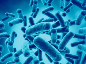 Los Probióticos: Aliados y Enemigos De La Histamina